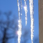 icicle_photos_Muffet
